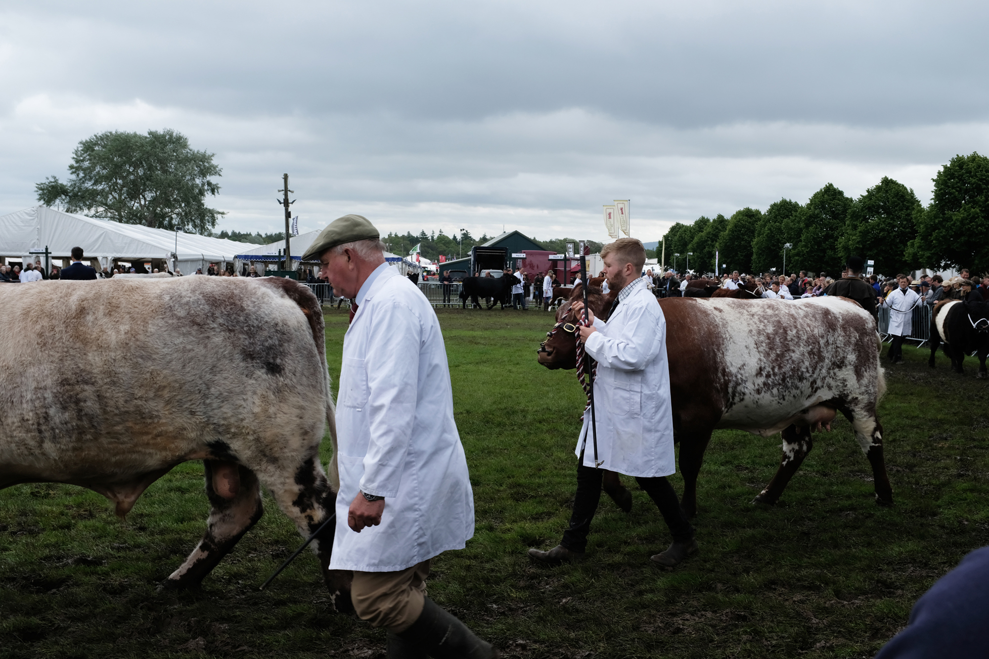 Photo of 2 men in white coats walking their cows